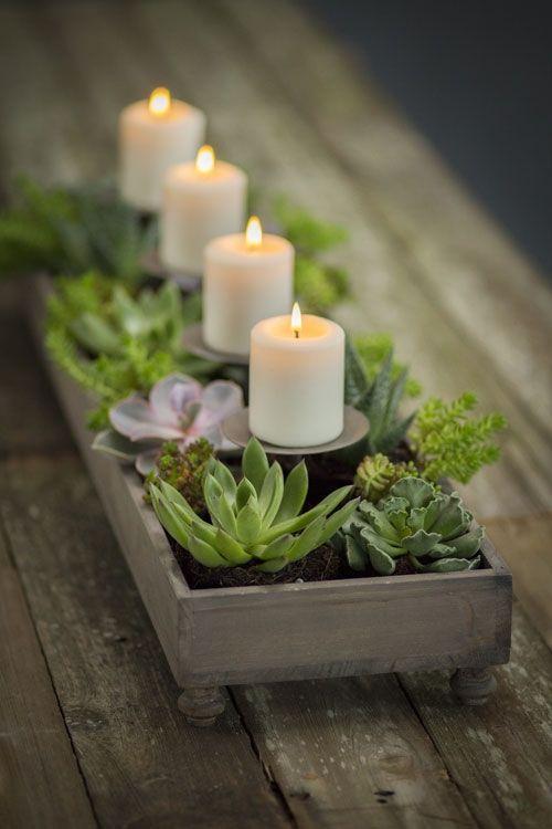 decoracao barata plantas
