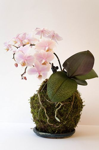 ideias decoracao kokedama 2