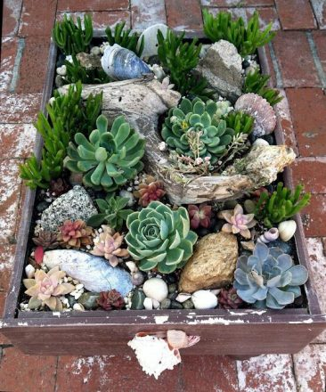 10 ideias de mini jardins com suculentas for Decoracion con plantas crasas